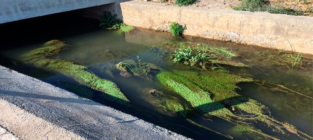 El PP de Nules ha denunciado que todavía no han llegado al municipio las ayudas del Servef para la contratación de personas desempleadas que deben realizar los trabajos de limpieza de las acequias.