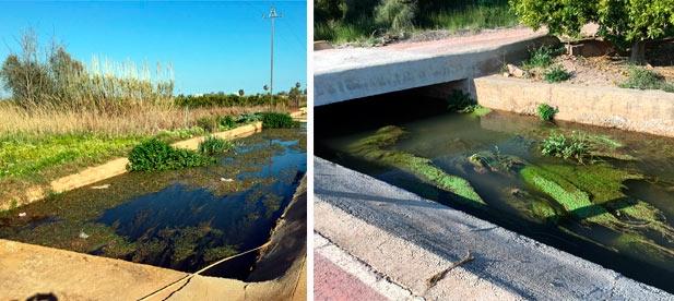 Las acequias de la zona baja de Nules están completamente anegadas y sucias, lo que puede comportar problemas para los campos y para la salud de las personas.