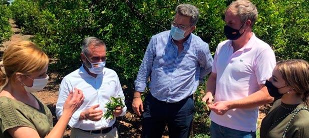"""Barrachina: """"La agricultura de Castellón está viviendo una situación de injusticia a diferencia de otros países de la Unión Europea"""""""