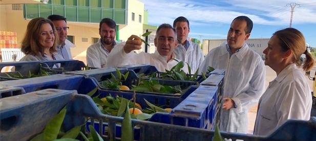 """Barrachina: """"Solo el PP puede defender al sector citrícola porque solo el PP podrá desalojar a Sánchez de la Moncloa con la suma de todo lo que nos une"""""""