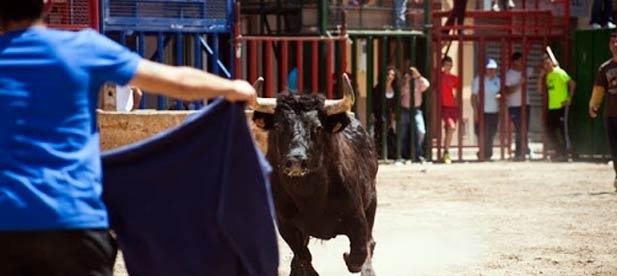 """Cabanes concentra el mayor número de ganaderías de la provincia de reses bravas y """"exige garantías para reactivar el festejo del mismo modo que se han activado otros sectores"""""""