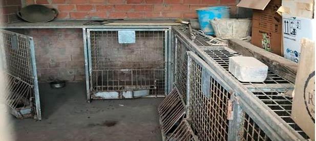 La portavoz del PP en Torreblanca vuelve a reclamar medidas a petición de asociaciones y vecinos, y exige el sacrificio cero para los animales recogidos