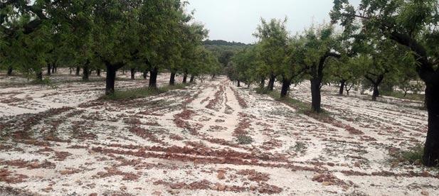 Los populares proponen que la Generalitat y el Gobierno arbitren ayudas urgentes ante los daños causados por la tormenta de pedrisco que afectó a los árboles en plena floración