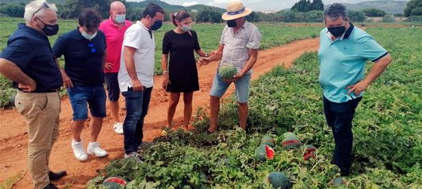 """Los diputados Mª Ángeles Pallarés y Andrés Martínez visitan una finca en Peñíscola afectada por el granizo. """"Es un desastre que merece una respuesta inmediata"""""""