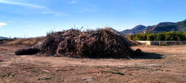 El PP de Nules ha vuelto a alertar de la acumulación de restos de poda en el vertedero ilegal de la Serraleta.