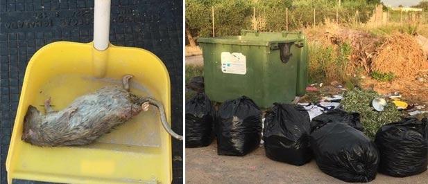 """Guillamón: """"Los vecinos confirman la existencia de roedores e insectos en las inmediaciones de sus viviendas habituales"""""""