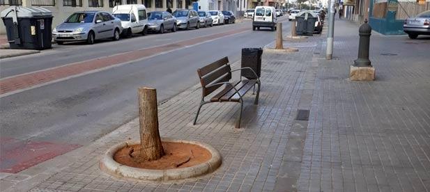 El Ayuntamiento de Nules  se gasta cada año más de 4.300€ en alquilar un árbol de Navidad artificial pero no le tiembla el pulso a la hora de talar más de una docena de árboles sanos en lugar de trasplantarlos.